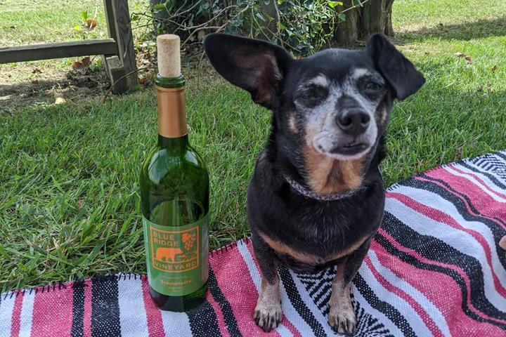 Pet Friendly Blue Ridge Vineyard