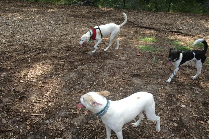 Pet Friendly East Clayton Dog Park