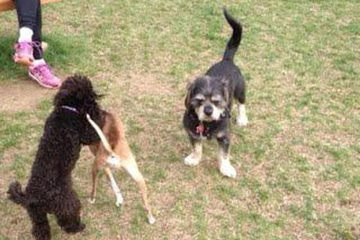 Pet Friendly Canine Commons: A Tribute to Working Dogs