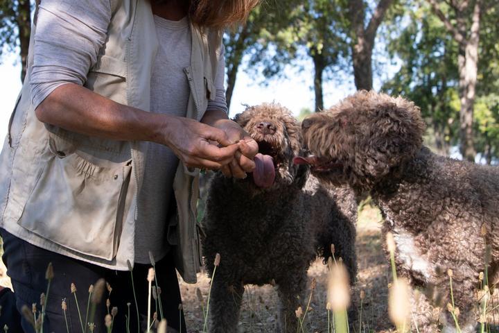 Pet Friendly Truffle Dog Training at a Truffle Ranch