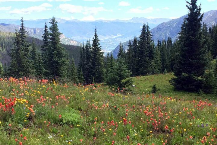 Pet Friendly Wheeler Lakes Trail