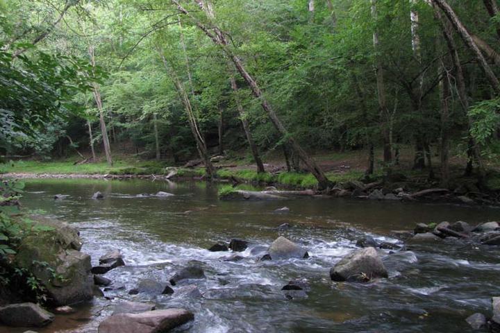 Pet Friendly Sal's Branch Trail