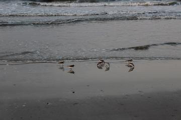 Pet Friendly Caswell Beach