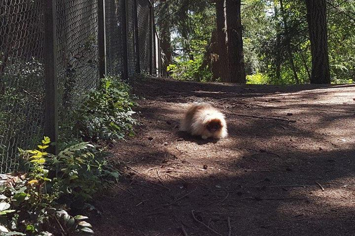 Pet Friendly Loganberry Lane Off Leash Dog Area