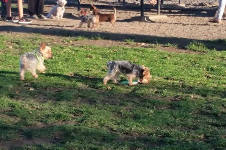 Pet Friendly David R. Gafin Dog Park