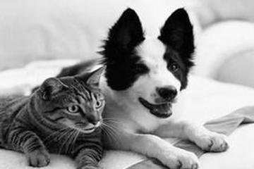 Pet Friendly Accent Inn