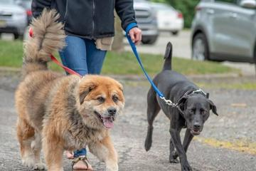 Pet Friendly OSCAR Annual 1K-9 Dog Walk