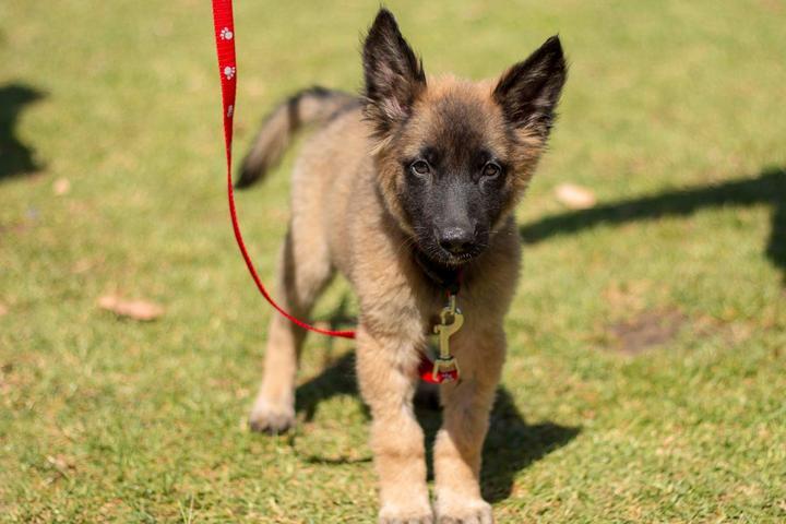 Pet Friendly Fido Day - Woodglen Vista Park (Reservations Required)