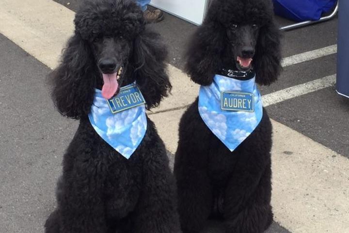 Dog Events in California - Bring Fido