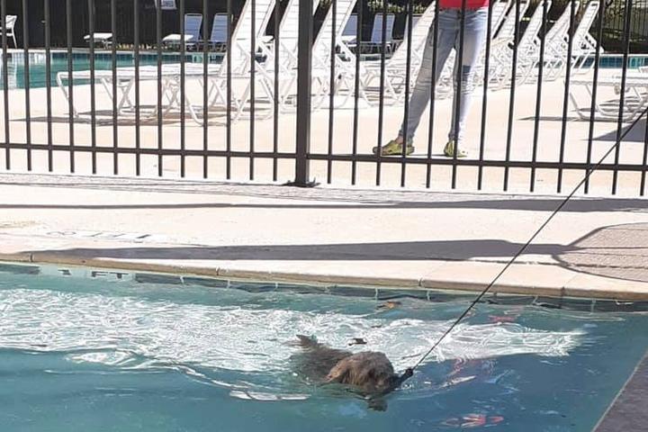 Pet Friendly Dog Days at Pebble Creek Swim Club