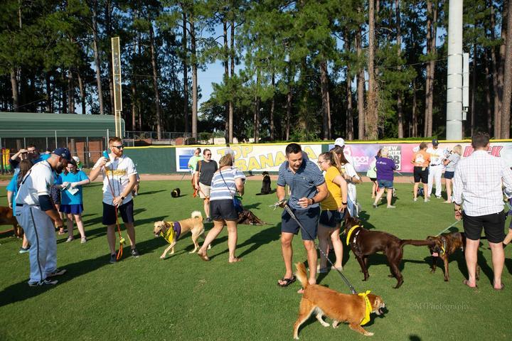 Pet Friendly Bark in the Park with the Savannah Bananas