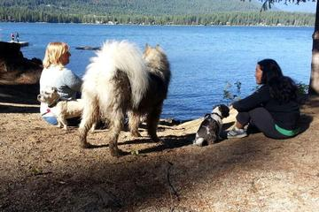 Pet Friendly Maian Meadows Dog Camp