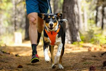 Pet Friendly Soldiers Pace Canicross and Trail Run