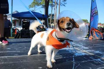 Pet Friendly Dog Daze