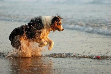 Pet Friendly Doggie Dip and Bathe to Save