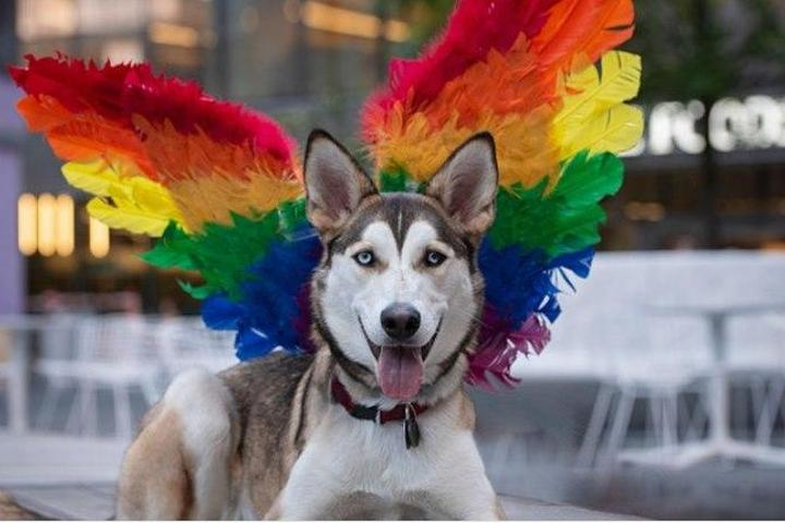 Pet Friendly Manhattan West Woof Fest: Paws for Pride
