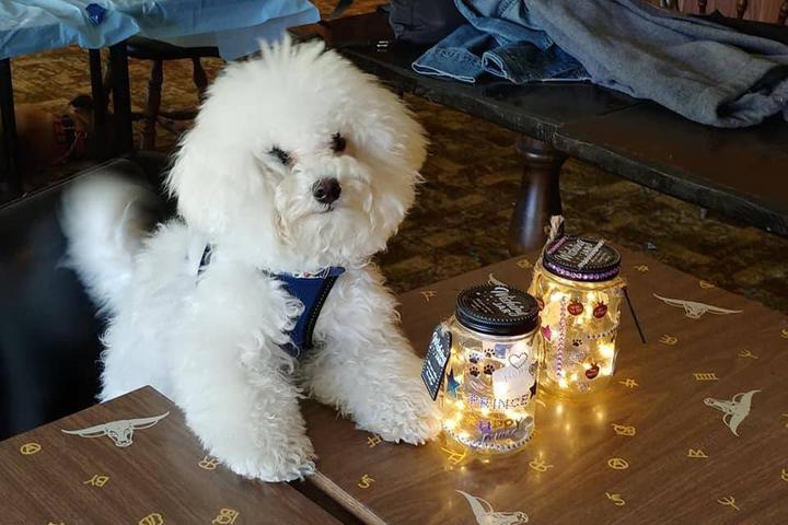 Pet Friendly Canine Camp Getaway June Camp
