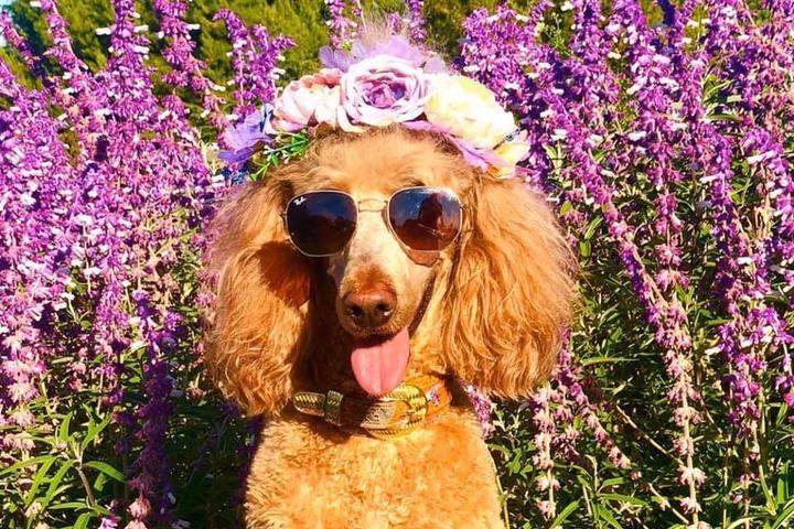 Pet Friendly South Coast Botanic Garden Dog Walking Hours