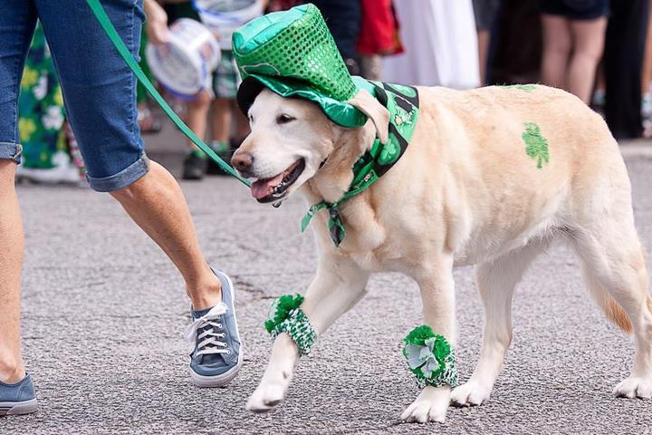 Pet Friendly Hilton Head Island St. Patrick's Day Parade 2022