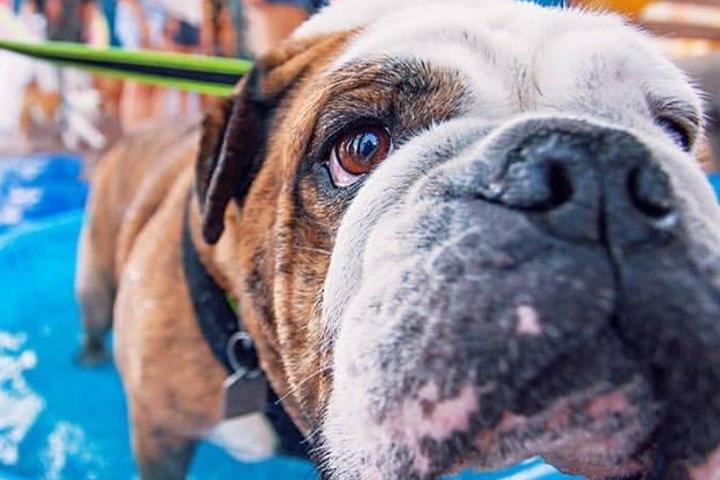 Pet Friendly Pints for Paws Craft Beverage Festival