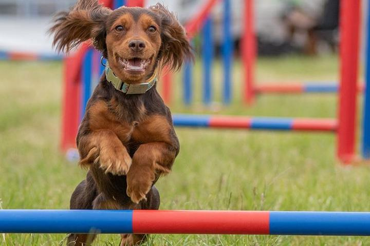 Pet Friendly DogFest New England