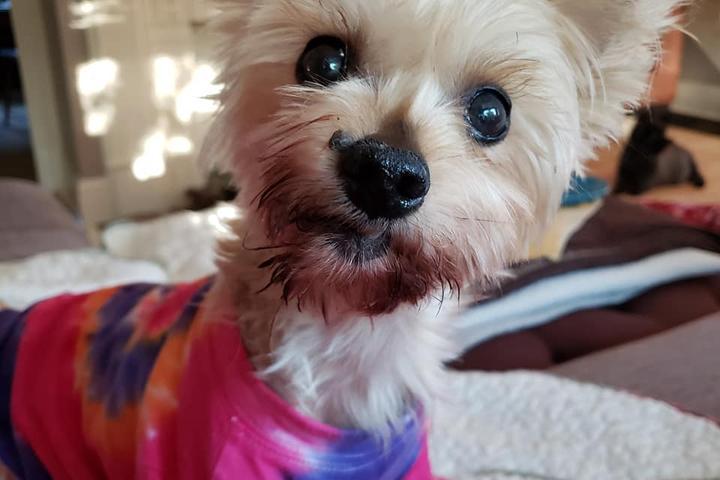 Pet Friendly LucyFest - Animal Rescue Festival