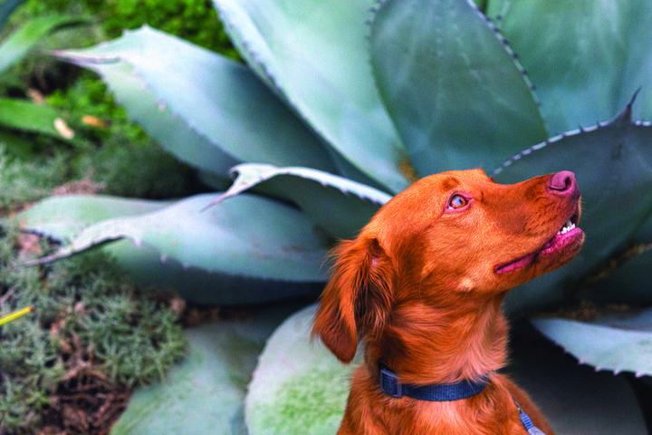 Pet Friendly Dog Days at the Garden
