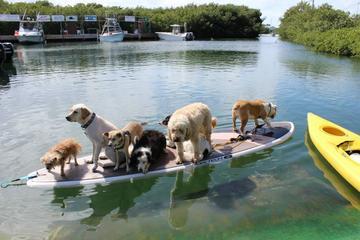 Pet Friendly Paddle Paw-Looza