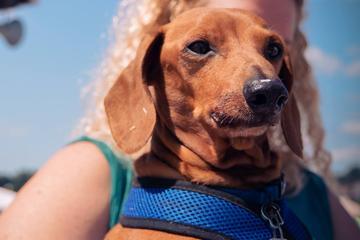 Pet Friendly Dogs Day in the Park & Mutt Strutt