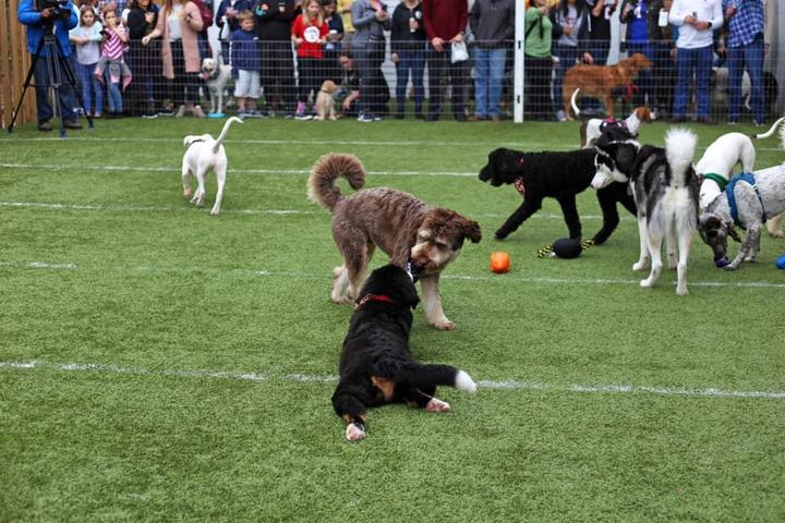 Pet Friendly Annual PUPPY BOWL at Kanine Social