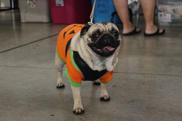 Pet Friendly Annual Pug-O-Ween