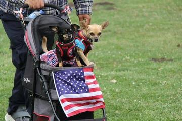Pet Friendly Town of Moraga 4th of July Celebration and Dog Parade