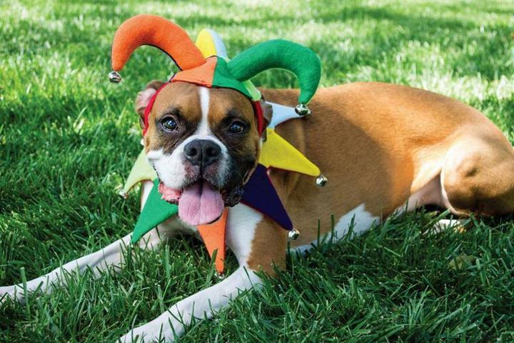 Pet Friendly Minnesota Renaissance Festival