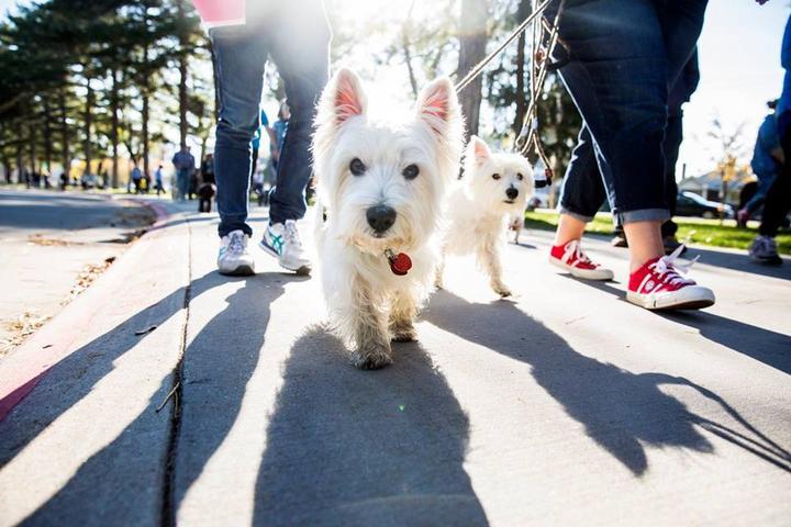 Dog Events in Arizona - Bring Fido