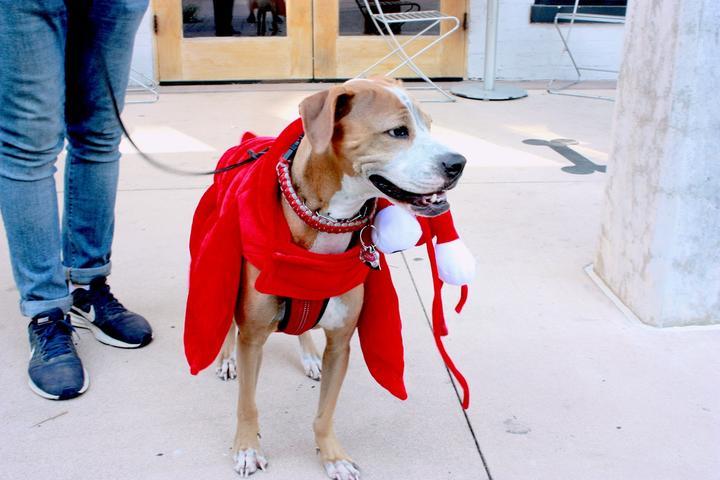Pet Friendly P&F Presents Pet-Toberfest