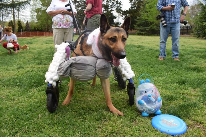 Pet Friendly Dog Easter Egg Hunt