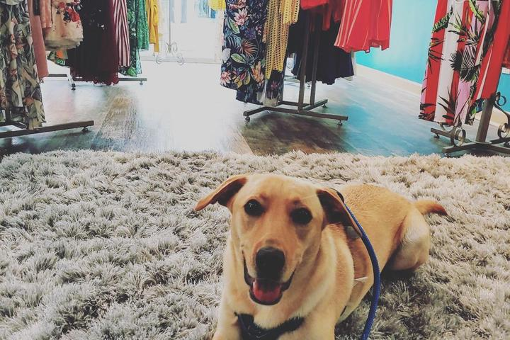Pet Friendly Doggy Date Night at Bell Tower Shops