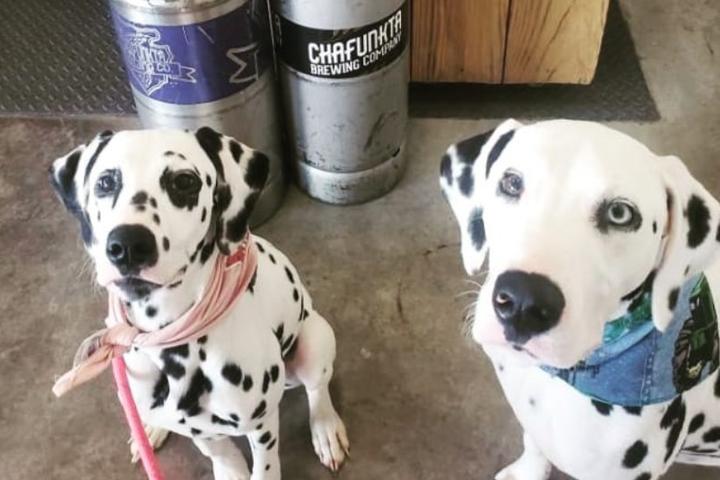 Pet Friendly Pups & Pints Sunday
