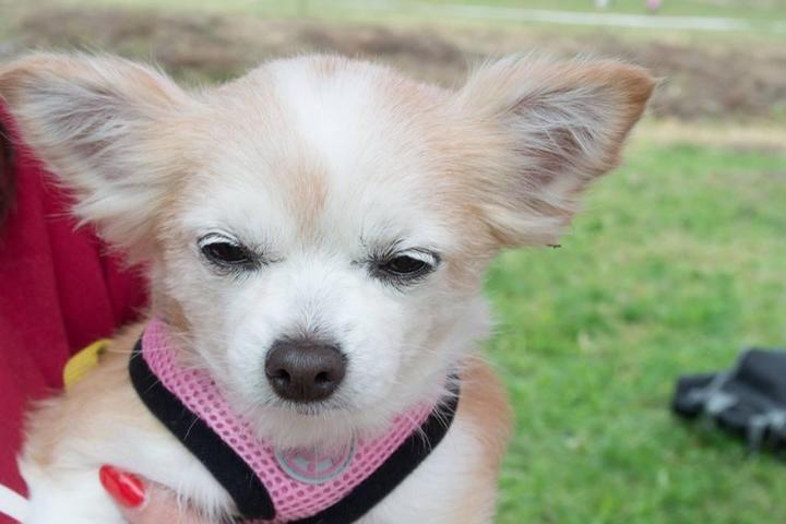 Dog Events in New Jersey - Bring Fido