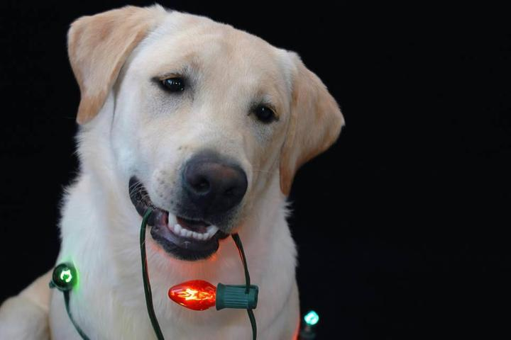 Pet Friendly Lights and Leashes