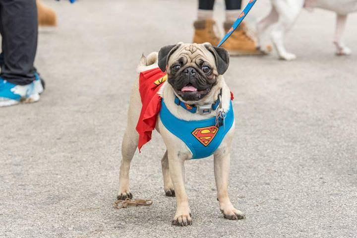 Dog Events in Wisconsin - Bring Fido