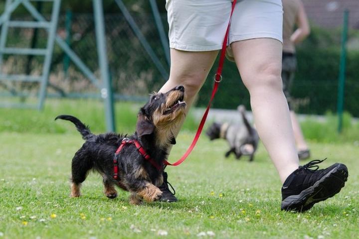 Pet Friendly Bark Around The Park
