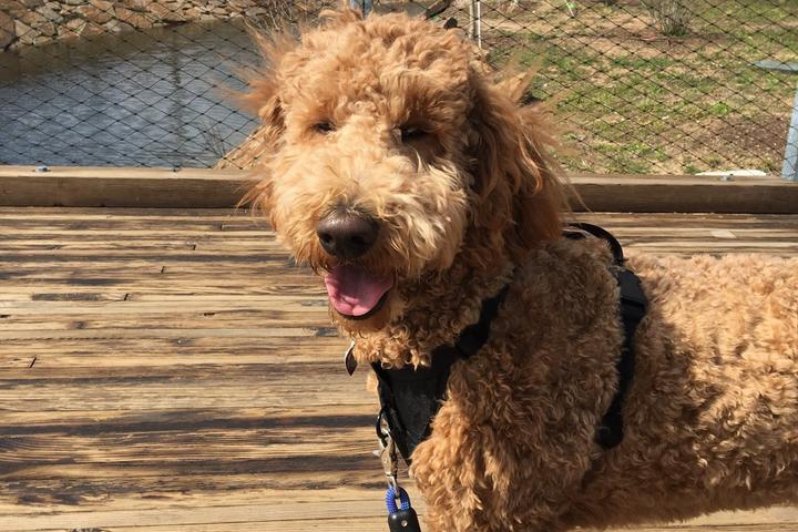 Pet Friendly Dog Play Wednesday