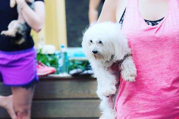 Pet Friendly Doga at Pup Plaza