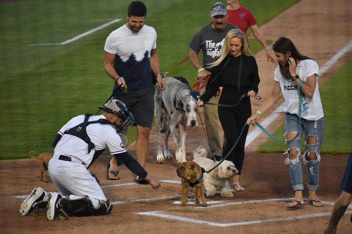 Pet Friendly Bark in the Park with Somerset Patriots