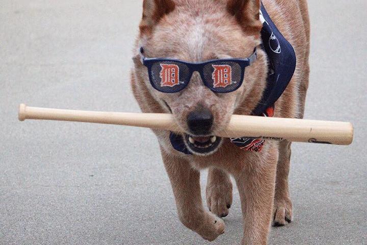 Dog Events in Michigan - Bring Fido