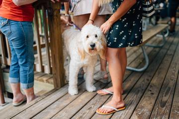 Pet Friendly Dog Days of Summer Paw-ty