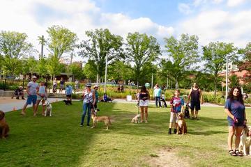 Pet Friendly Yappy Hour @ LeBauer Park