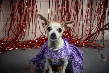 Dog Events In Greensboro Nc Bringfido