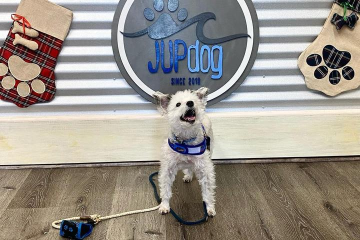 Pet Friendly JUPDog Grand Opening and Adoption Event